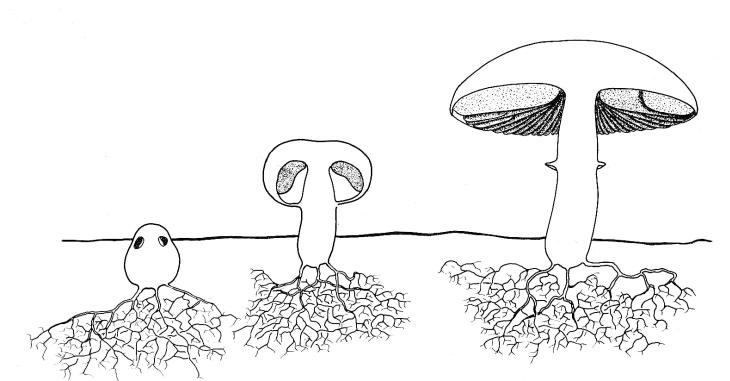 labeled fungi diagram