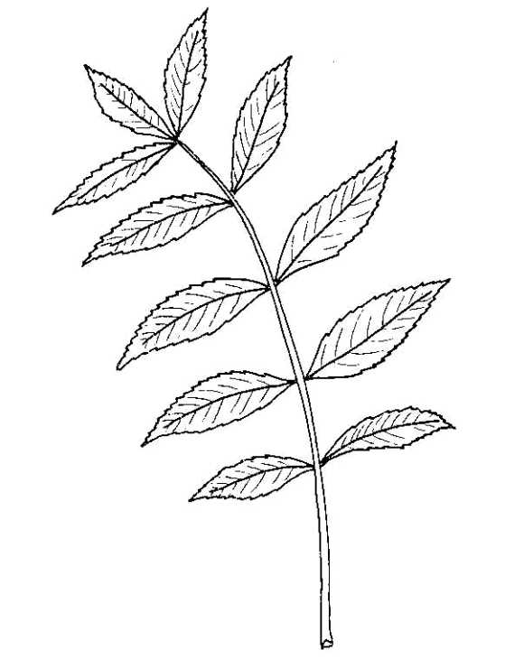 Bonsai  Simple English Wikipedia the free encyclopedia
